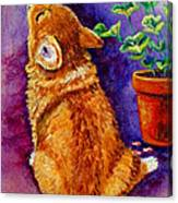 Bad Puppy In Mom's Geranium Canvas Print