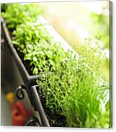 Balcony Herb Garden Canvas Print