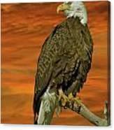 Bald Eagle At Sunrise Canvas Print
