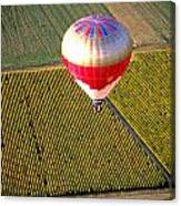 Ballooning Over Burgundy Canvas Print