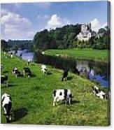 Ballyhooley, Co Cork, Ireland Friesian Canvas Print