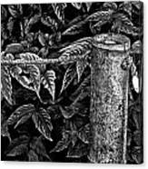 Bamboo Border Canvas Print