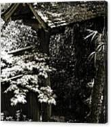 Bamboo Garden -2 Canvas Print