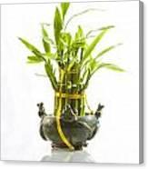 Bamboo In Hi-key Canvas Print