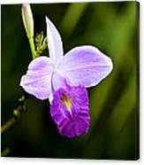 Bamboo Orchid Canvas Print