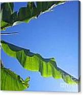 Banana Leaf In The Sky Canvas Print