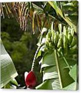 Banana Palm And Flower Canvas Print