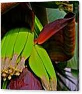 Banana Plant I Canvas Print