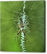 Banana Spider With Web Canvas Print