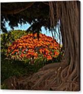 Banyan And Poinciana Trees Canvas Print