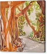 Banyan In The Afternoon Canvas Print