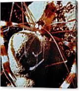 Barbershop Shrimp Canvas Print