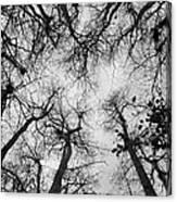 Bare Cypress Canvas Print