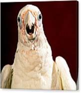Bare Eyed Cockatoo Speaks Canvas Print