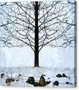 Bare Tree In Winter Canvas Print