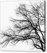 Bare Tree Silhouette Canvas Print