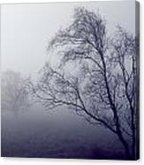 Bare Trees In Thick Fog, Peak District Canvas Print