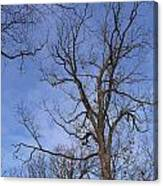Bare Trees With Blue Sky Canvas Print