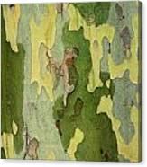 Bark Of A Sycamore Tree Canvas Print