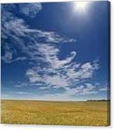 Barley Field Near Airdrie, Alberta Canvas Print