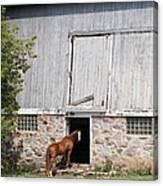 Barn And Horse Canvas Print