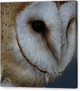 Barn Owl Closeup Canvas Print
