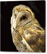 Barn Owl In A Dark Tree Canvas Print
