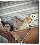 Barn Owls 1 Canvas Print