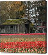 Barn Surrounded By Tulips Canvas Print