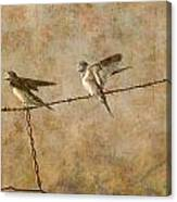 Barn Swallows On Barbed Wire Fence Canvas Print