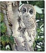 Barred Owl II Canvas Print