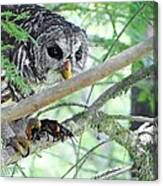 Barred Owl With Crawfish Canvas Print