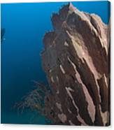Barrel Sponge And Diver, Papua New Canvas Print