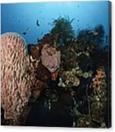 Barrel Sponge On Liberty Wreck, Bali Canvas Print