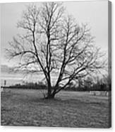 Barren Tree On A Winters Day Canvas Print