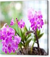 Basket Of Orchids Canvas Print