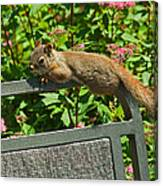 Basking Squirrel Canvas Print