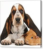 Basset Hound And Guinea Pig Canvas Print