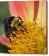 Bathing In Pollen  Canvas Print