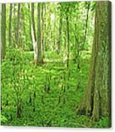 Baton Rouge Blueonnet Swamp  La Canvas Print