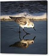 Beach Bird Canvas Print