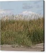 Beach Bluff Canvas Print