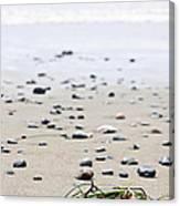 Beach Detail On Pacific Ocean Coast Of Canada Canvas Print