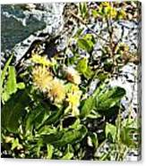 Beach Flowers Canvas Print