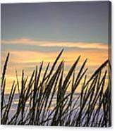 Beach Grass Canvas Print