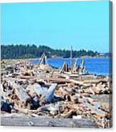 Beach Of Logs Canvas Print