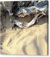 Beach Shore Canvas Print