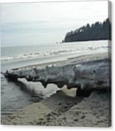 Beach Wood Canvas Print