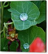 Beads Of Life Canvas Print