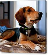 Beagle Mix Puppy Canvas Print